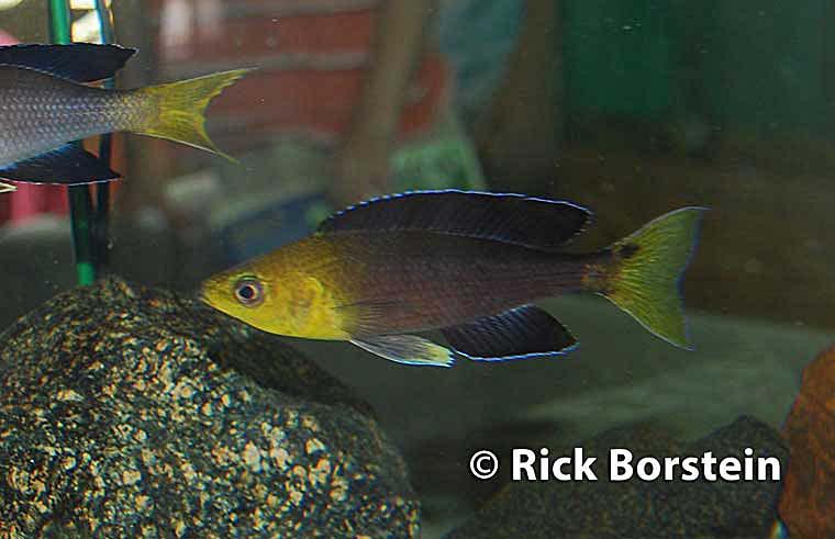 fishhop2012_003