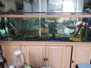 125 gallon for sale with lights and canister filter