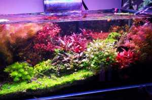A Variety of Aquatic Plants and more! Easy/Beginner Friendly - High Tech stuff. Tissue Culture Available too