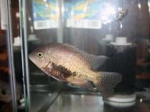 aca2006_fish_056.jpg