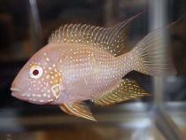 aca2006_fish_075.jpg