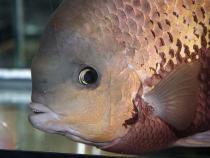 aca2006_fish_062.jpg