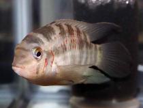aca2006_fish_071.jpg
