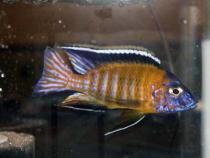 aca2006_fish_022.jpg