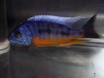 aca2006_fish_007.jpg