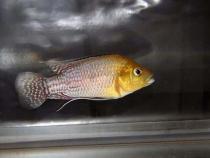 aca2006_fish_010.jpg