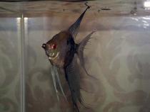 aca2006_fish_058.jpg