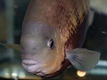aca2006_fish_043.jpg