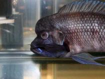 aca2006_fish_076.jpg