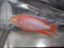 aca2006_fish_048.jpg