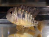 aca2006_fish_036.jpg