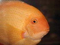 aca2006_fish_006.jpg