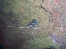 aca2006_side_trips_043.jpg