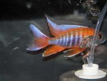 aca2006_fish_029.jpg