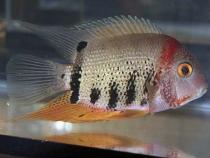 aca2006_fish_070.jpg