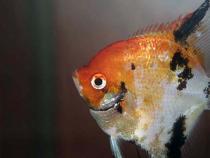 aca2006_fish_074.jpg