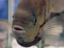 aca2006_fish_073.jpg