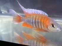 aca2006_fish_045.jpg