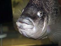 aca2006_fish_016.jpg