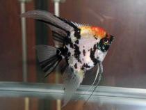 aca2006_fish_084.jpg