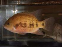 aca2006_fish_005.jpg
