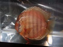 aca2006_fish_024.jpg