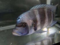 aca2006_fish_028.jpg
