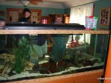 fishhop2012_002