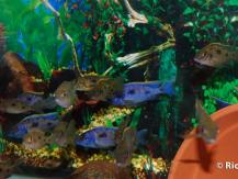 fishhop2012_012