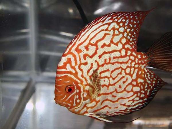 aca2006_fish_078.jpg