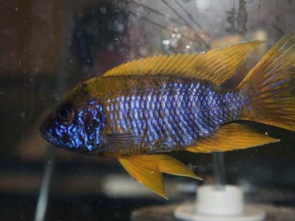 aca2006_fish_021.jpg