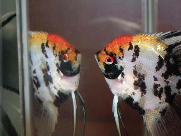 aca2006_fish_061.jpg