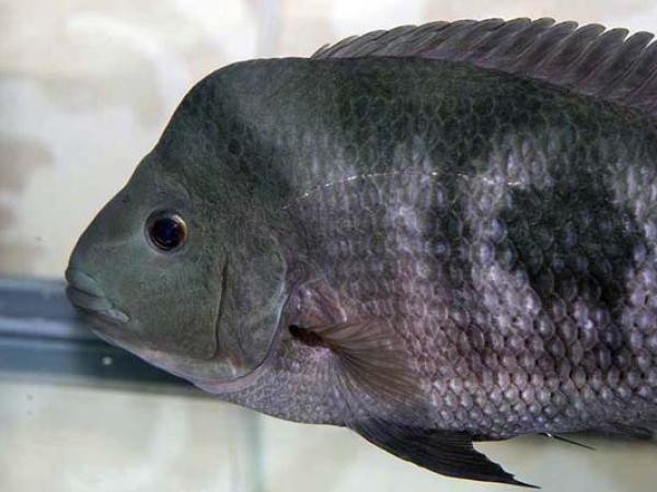 aca2006_fish_013.jpg