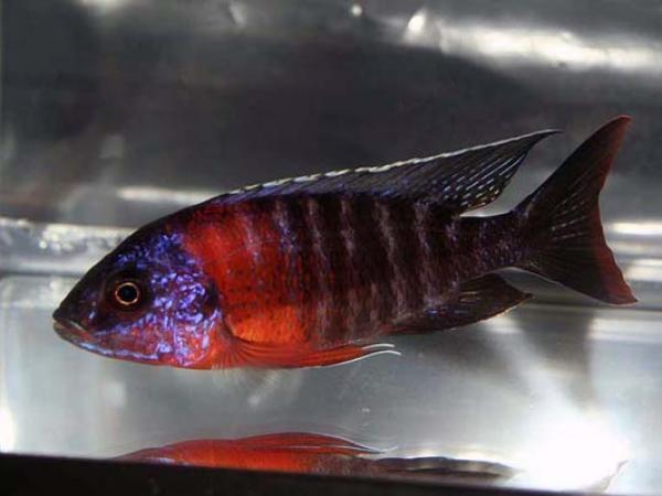 aca2006_fish_025.jpg