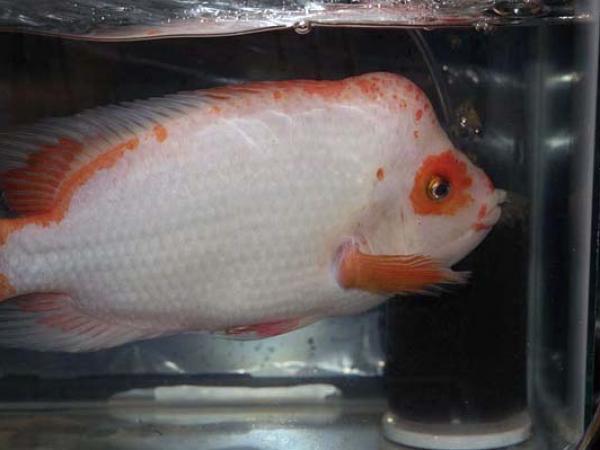 aca2006_fish_003.jpg