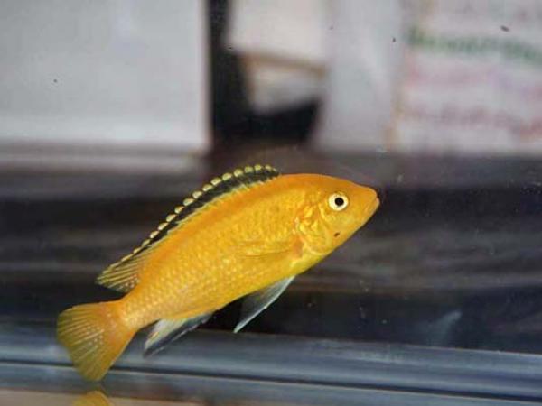 aca2006_fish_027.jpg