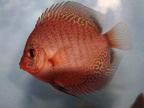 aca2006_fish_060.jpg