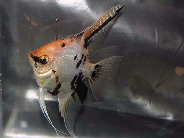 aca2006_fish_054.jpg
