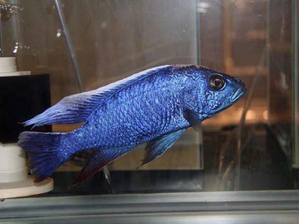 aca2006_fish_008.jpg
