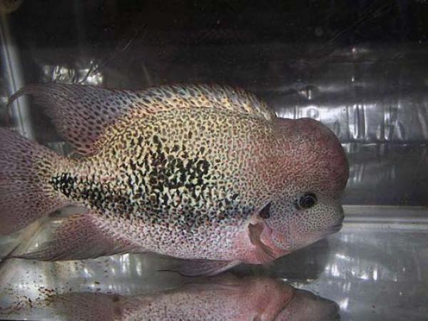 aca2006_fish_004.jpg