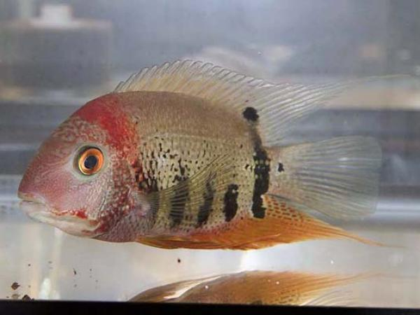 aca2006_fish_034.jpg