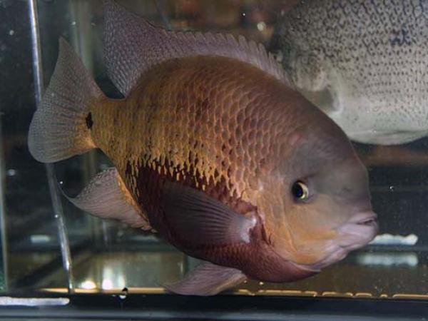 aca2006_fish_002.jpg
