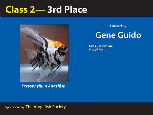 aca2006_winners_008.jpg