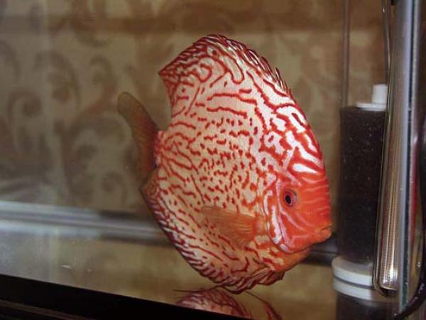 aca2006_fish_049.jpg