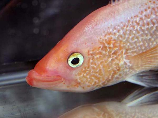 aca2006_fish_018.jpg