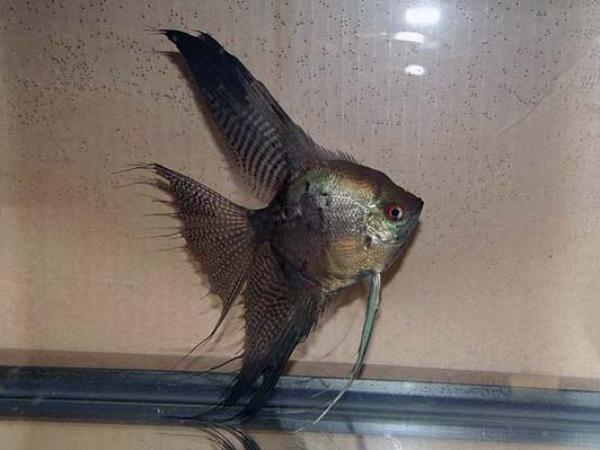 aca2006_fish_053.jpg