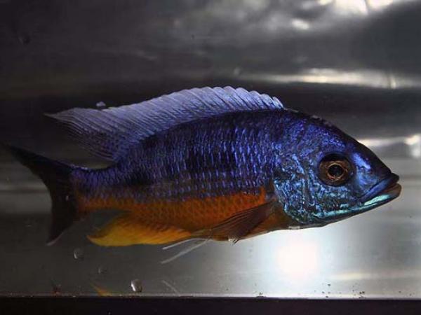 aca2006_fish_020.jpg