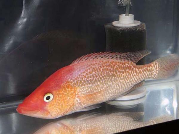 aca2006_fish_019.jpg