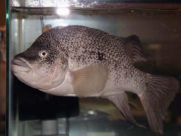 aca2006_fish_015.jpg