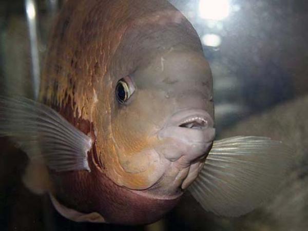 aca2006_fish_001.jpg